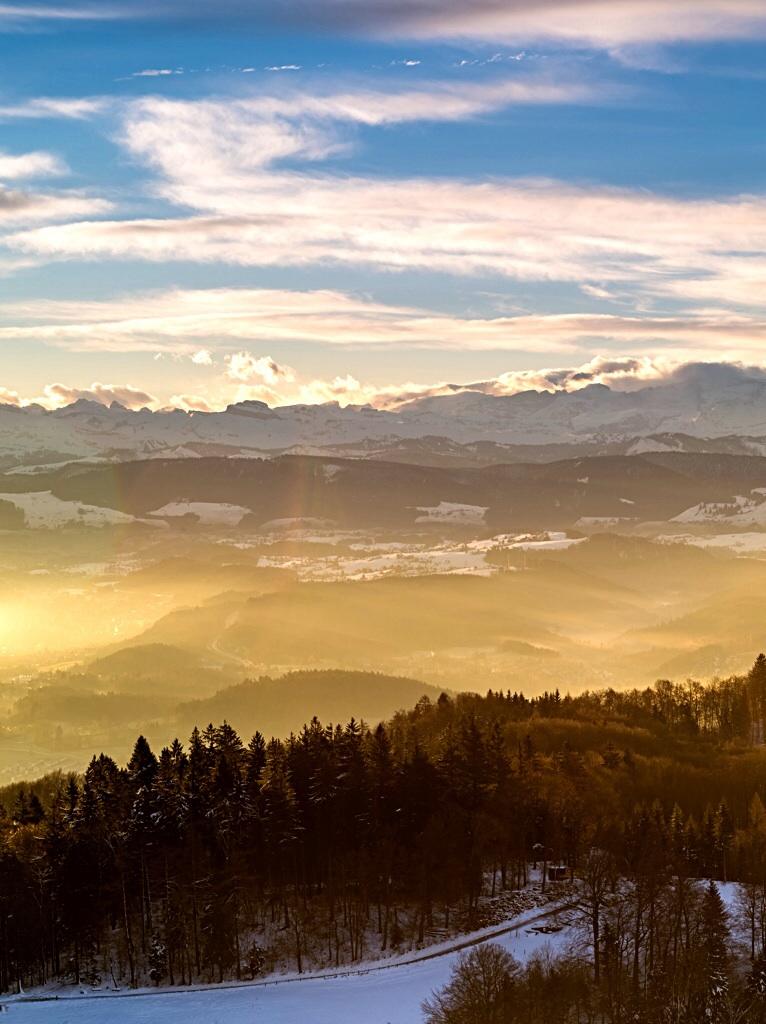 Albiskette im Morgenlicht
