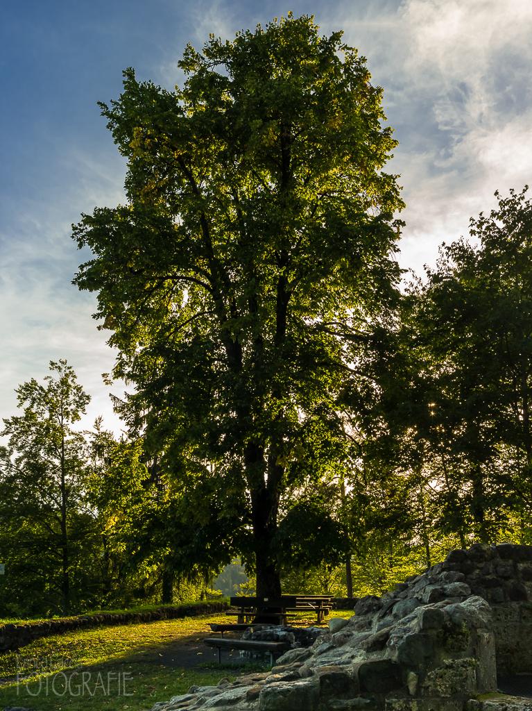 Ruine Altlandenberg ob Bauma