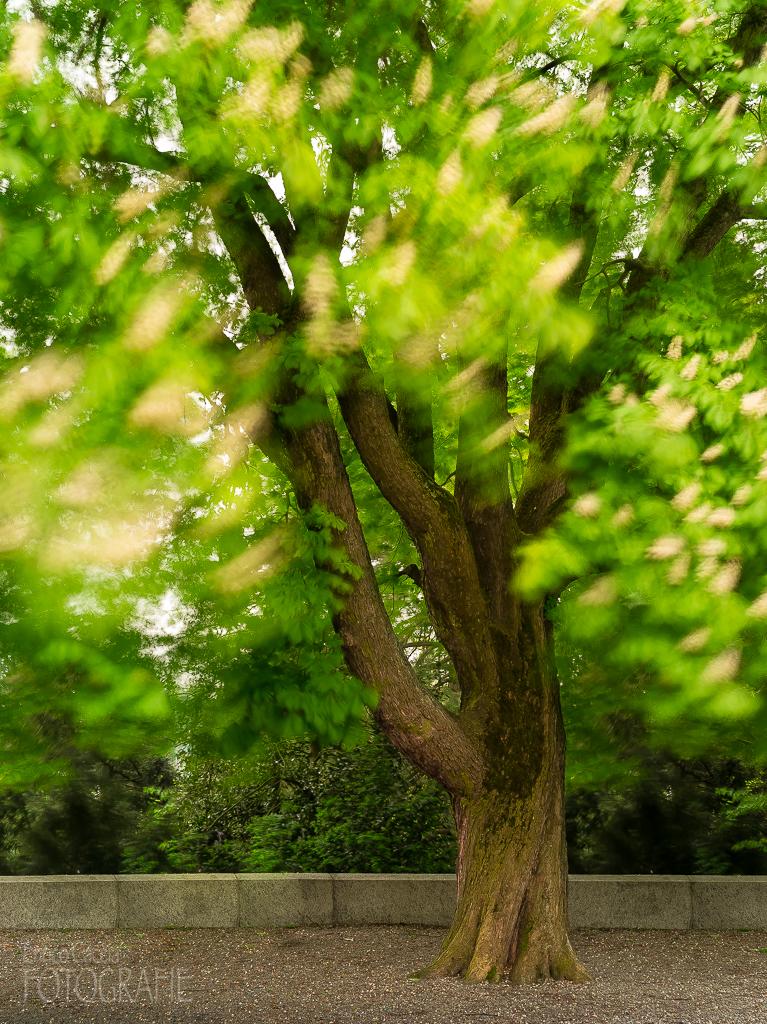 Baum, 55mm, Blende 5.6, Verschluss 30 Sek. Neutraldichtefilter