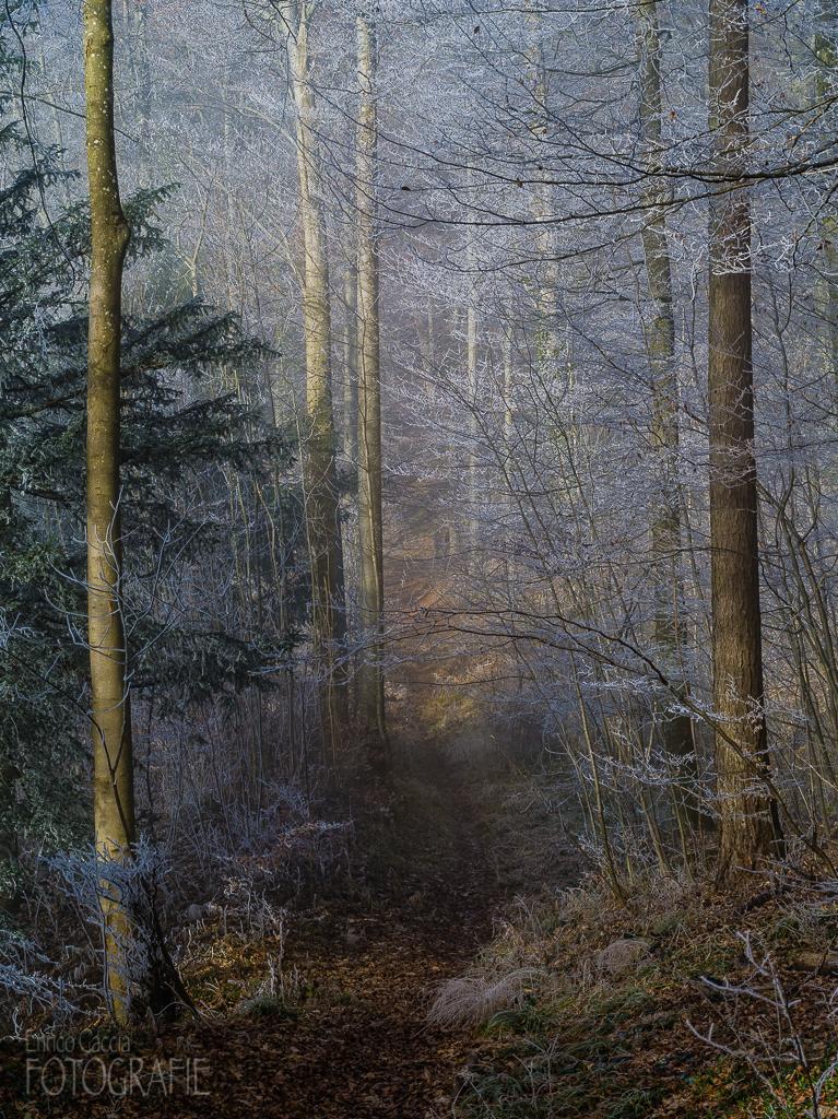 Uetliberg Nebelwald