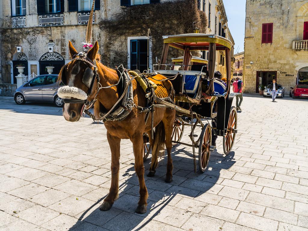Malta - Mdina Carrozza Pferdekutsche