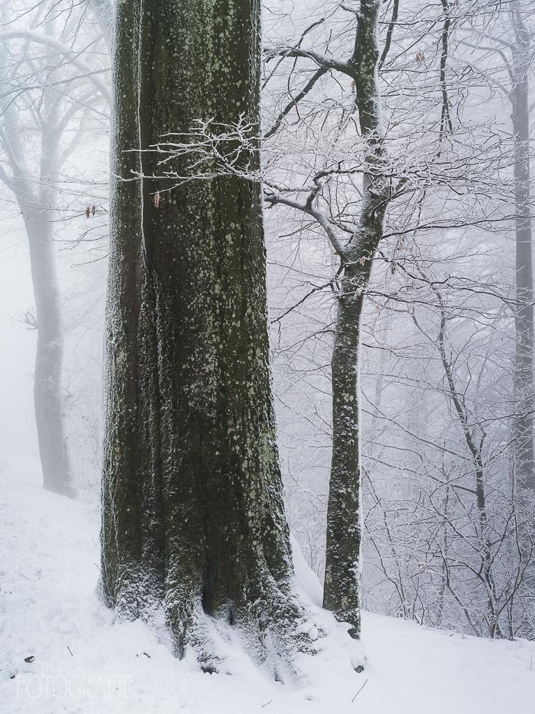 Uetliberg Schnee, Eis und Nebel