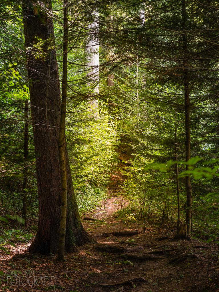 Jakobsweg im Wald