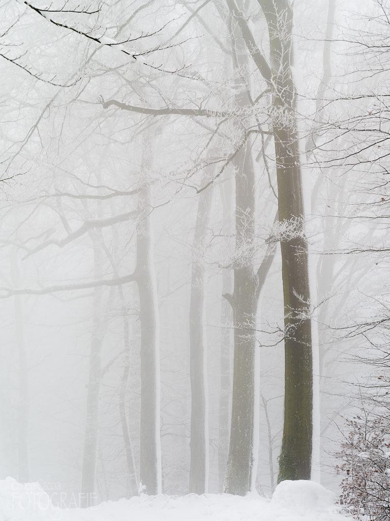 Uetliberg im Nebel
