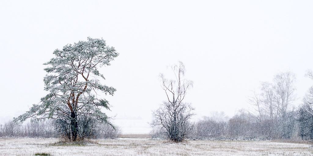 Naturschutzgebiet Greifensee im Winter