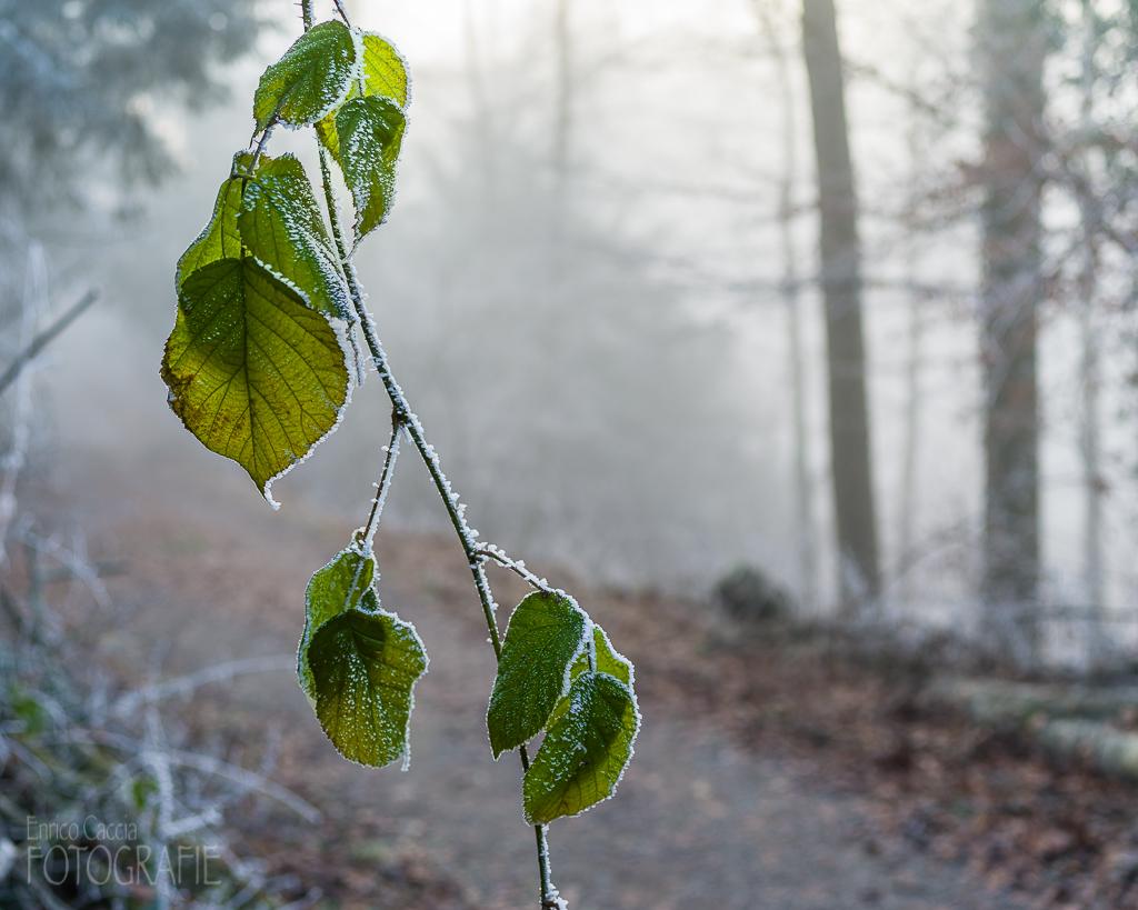 Uetliberg Winterwald Laub