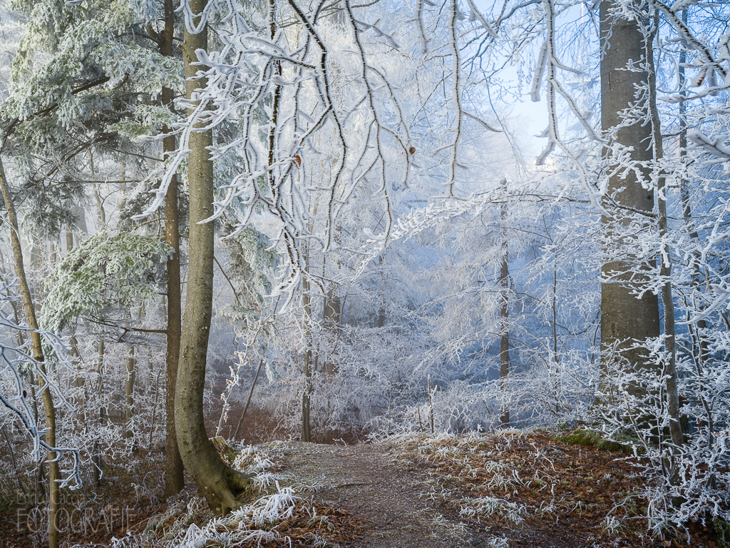 Uetliberg Winterwald