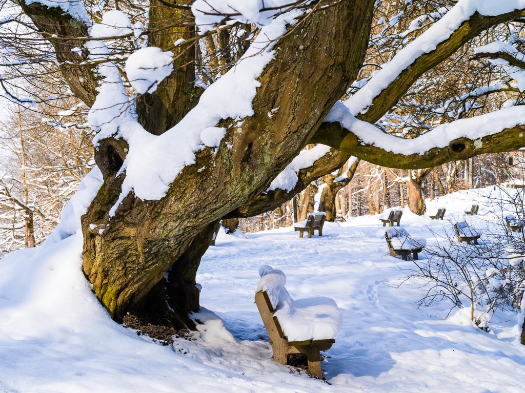 Schneebedeckte Parkbänke unter Baum