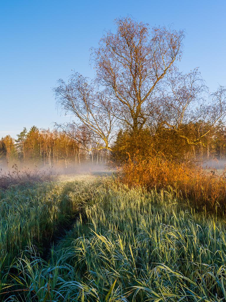 Herbst am Pfäffikersee