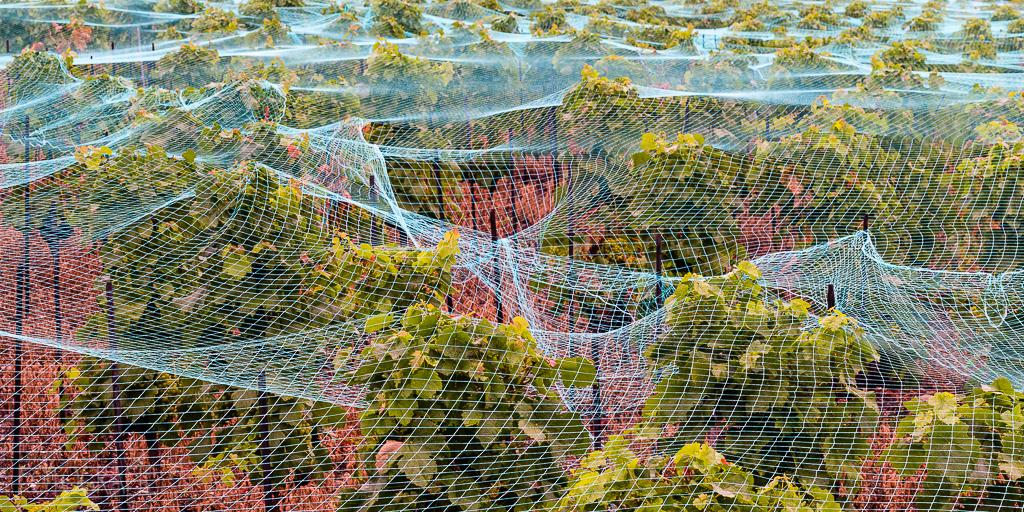 Weinberg im Lavaux
