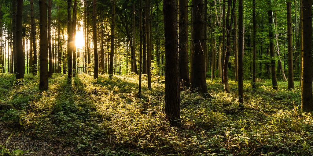 Lichtstimmung im Wald