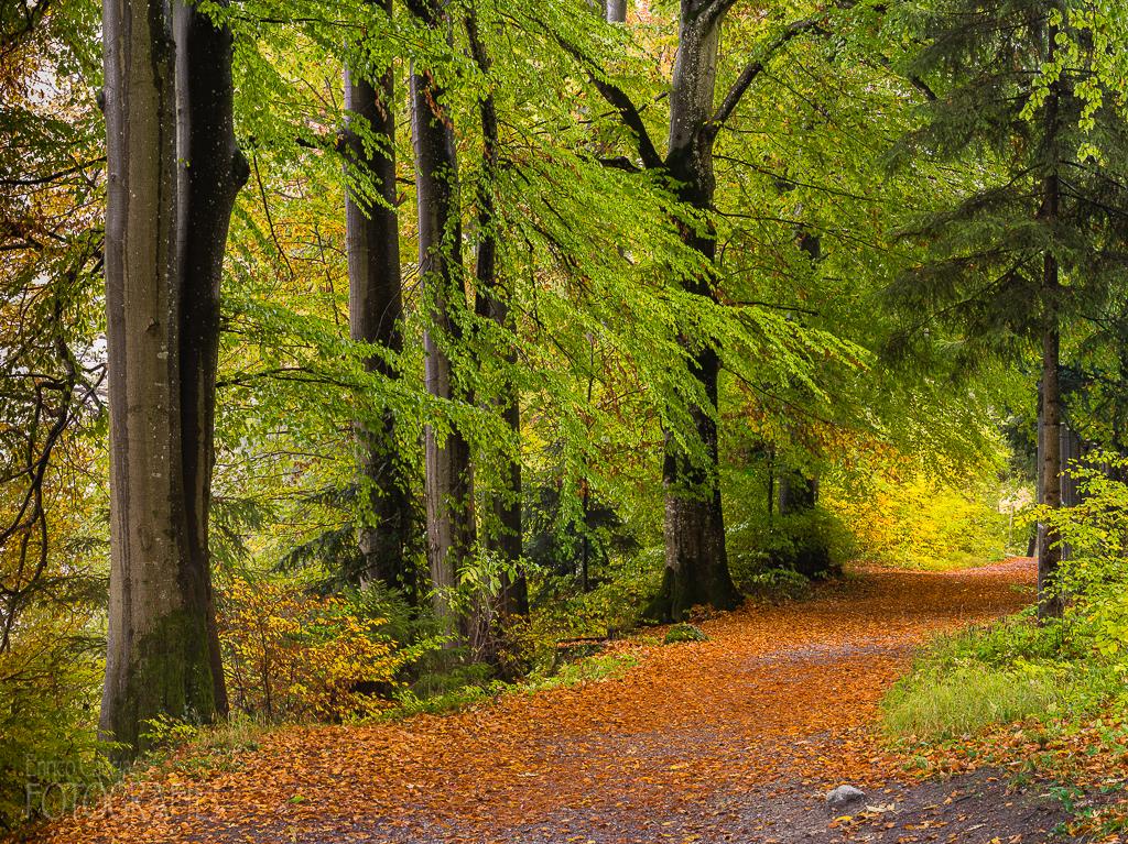 Herbstwald Uetliberg